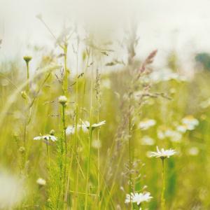 Heinä- ja kukkaniitty kesällä.